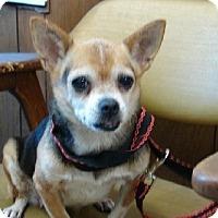 Adopt A Pet :: Anna - Aurora, IL