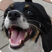 Adopt A Pet :: Papi - MINNEAPOLIS, KS
