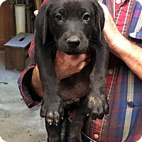 Adopt A Pet :: Jodie - Marion, NC