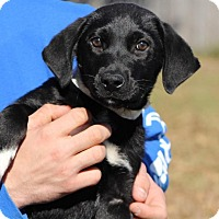 Adopt A Pet :: Happy - Berkeley Heights, NJ