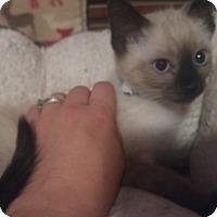 Adopt A Pet :: Sarh - Loveland, CO