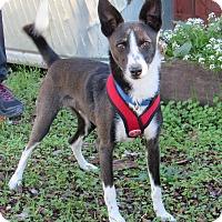 Adopt A Pet :: Rico - Sonoma, CA