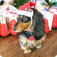 Adopt A Pet :: Lola Givens - Houston, TX