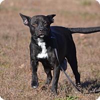 Adopt A Pet :: Katie - Lebanon, MO