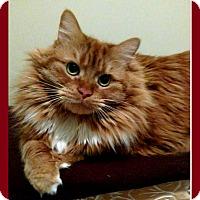 Adopt A Pet :: Hazel - Mt. Clemens, MI