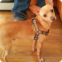 Adopt A Pet :: Sunny - Denver, CO