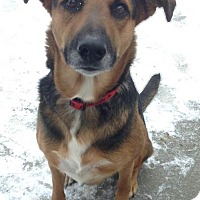 Adopt A Pet :: Mischa - Shaftsbury, VT