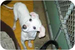 Hound (Unknown Type) Mix Puppy for adoption in Ardmore, Oklahoma - Waylon