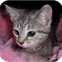 Adopt A Pet :: Bonita - Arlington, VA
