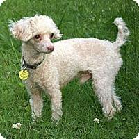 Adopt A Pet :: Isaiah - Mooy, AL