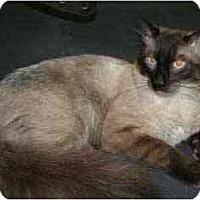 Adopt A Pet :: Cody - Davis, CA
