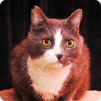Adopt A Pet :: Jethro - Merrifield, VA