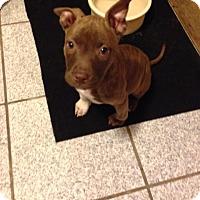 Adopt A Pet :: Sahara - LaGrange, OH
