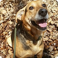 Adopt A Pet :: 1-1 Henry - Triadelphia, WV