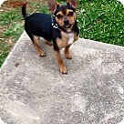 Adopt A Pet :: Peppy NO ADOPT FEE - Sherman, CT