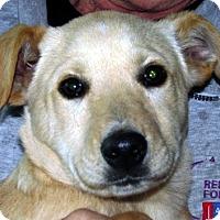 Adopt A Pet :: Lance - Germantown, MD