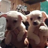 Adopt A Pet :: Alvin - springtown, TX