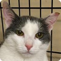 Adopt A Pet :: Gerald - Medford, MA