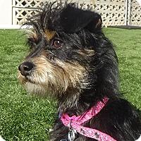 Adopt A Pet :: Baby - Inglewood, CA