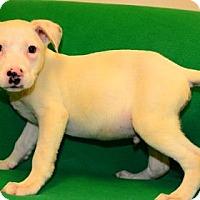 Adopt A Pet :: Luke - Suwanee, GA