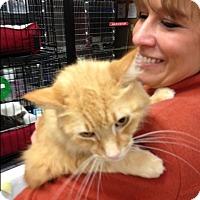 Adopt A Pet :: Shorty - EASLEY, SC