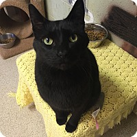 Adopt A Pet :: Orion - Simpsonville, SC