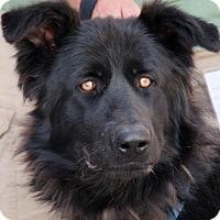 Adopt A Pet :: Obie - Palmdale, CA