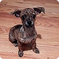 Adopt A Pet :: Tigger - Studio City, CA