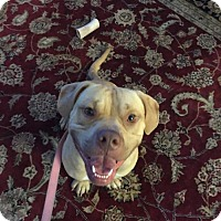 Adopt A Pet :: Leo - Marlton, NJ