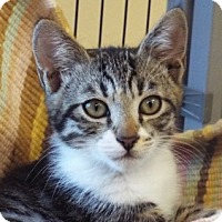 Adopt A Pet :: Sam - Grants Pass, OR