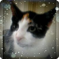 Adopt A Pet :: Kelly - Trevose, PA