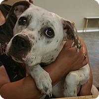 Adopt A Pet :: Dottie - Lisbon, OH