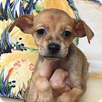 Adopt A Pet :: Aubrey - Ft. Lauderdale, FL