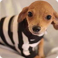Adopt A Pet :: Paboo - Phoenix, AZ