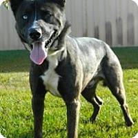 Adopt A Pet :: Buck - Columbus, NE