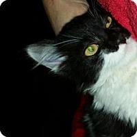 Adopt A Pet :: Zorro - Walnut Creek, CA