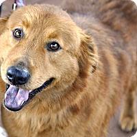 Adopt A Pet :: Patty - Woodburn, OR