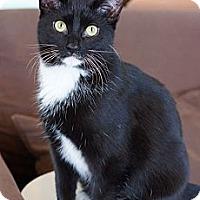 Adopt A Pet :: Abode - St. Louis, MO