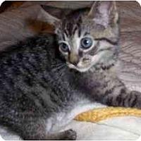 Adopt A Pet :: JMC-05-1-3 - Davis, CA