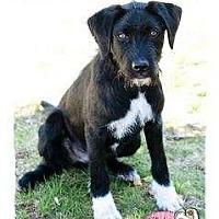 Adopt A Pet :: Kolby - Haverhill, MA