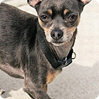 Adopt A Pet :: Jean Luc - Lake Odessa, MI