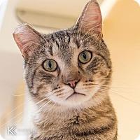 Adopt A Pet :: Callaway - St. Paul, MN
