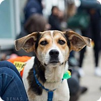 Adopt A Pet :: Tara Chambler - Brooklyn, NY