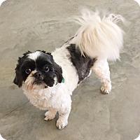 Adopt A Pet :: Bandit - Hillsboro, IL