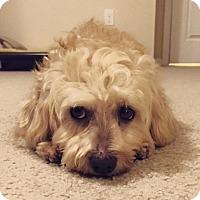 Adopt A Pet :: Pia - Pittsburgh, PA