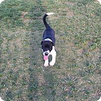 Adopt A Pet :: Sabrina - Las Vegas, NV