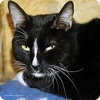 Adopt A Pet :: Ezra - Tucson, AZ