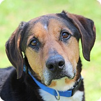 Adopt A Pet :: Clyde - Prince Frederick, MD