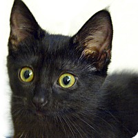 Adopt A Pet :: Sadie - Durham, NC