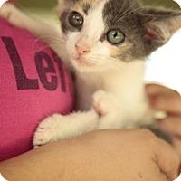Adopt A Pet :: Vidia - Davie, FL